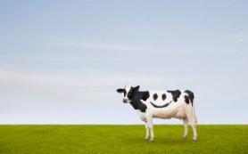 Генетически модифицированные коровы избавят детей от аллергии