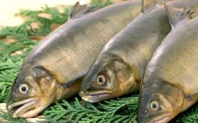 Употребление рыбы несет в себе скрытую угрозу