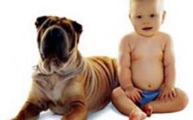 Присутствие животных положительно влияет на развитие детей с аутизмом