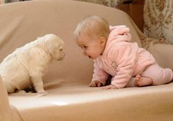 Хотите ребенка не аллергика – заведите собаку