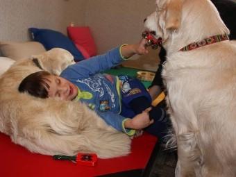 Для реабилитации детей-инвалидов будут использовать собак