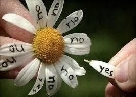 Любит – не любит…