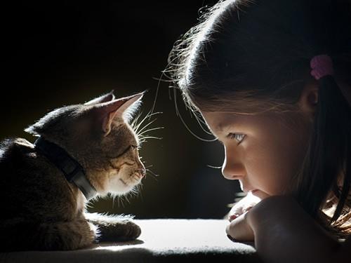 Кошки могут сделать ребенка глупее
