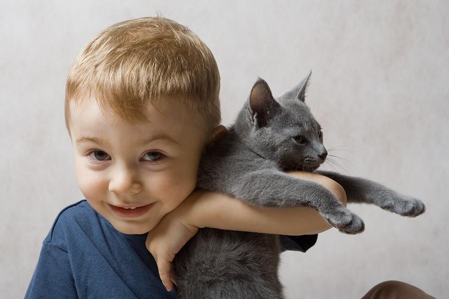 Общение с кошками ослабляет умственные способности детей