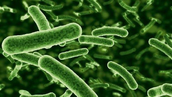 Естественные роды и грудное вскармливание не «обогатят» микрофлору кишечника