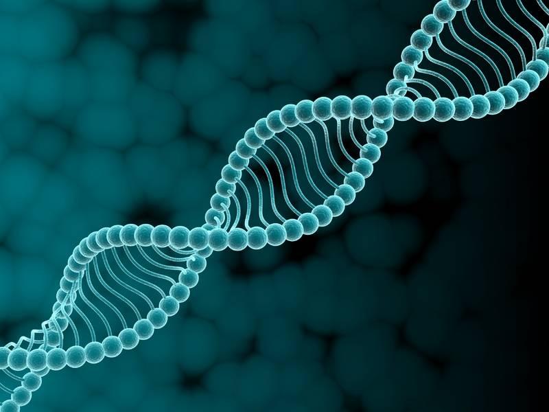 Искусственное оплодотворение нарушает работу генов
