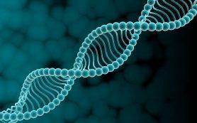 Перед планированием беременности посетите врача-генетика