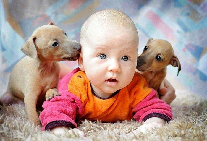 Собака в доме поможет ребенку не стать аллергиком