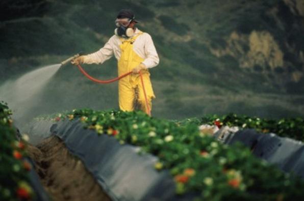 Пестициды опасны для здоровья детей