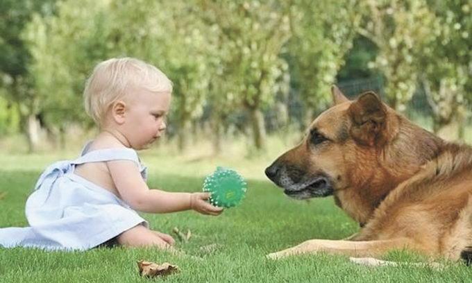 Собака против детской астмы