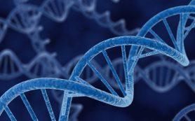 Сети ДНК могут вызвать закупорку кровеносных сосудов
