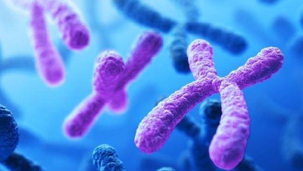 Ученые советуют беременным женщинам проводить полный скрининг 24 хромосом