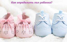 Как определить пол ребенка на ранних сроках беременности?